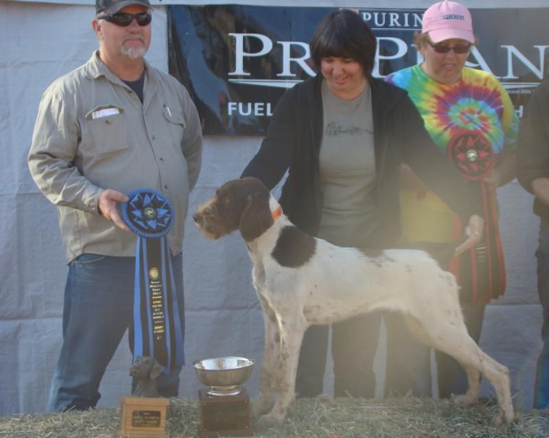 Idawire King Ralph--Winner of the 2012 GWPCA Puppy Classic!