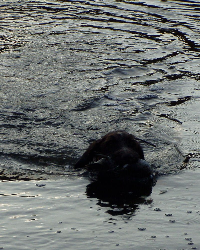 Mimi Retrieving from the water